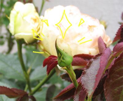 20050529-2.jpg