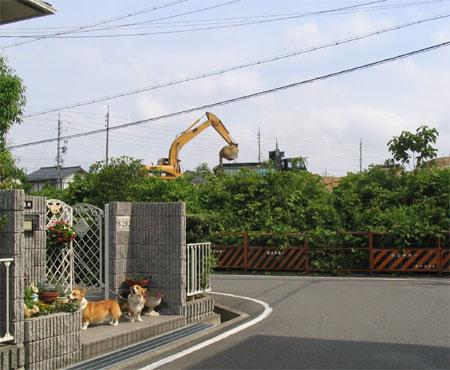 20050611-1.jpg